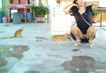 Cats , cats ,cats