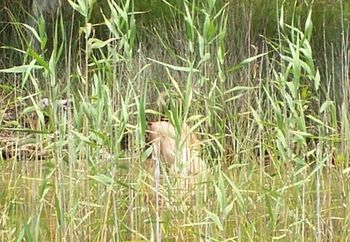 Caught In The Reeds Pt. 1