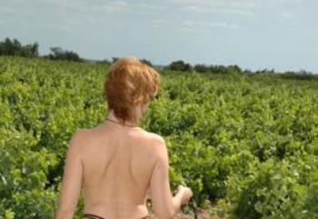 Jolie In Vine's Field